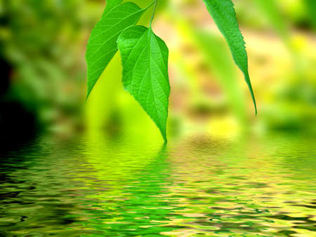 beautiful leaves with a water reflection photo
