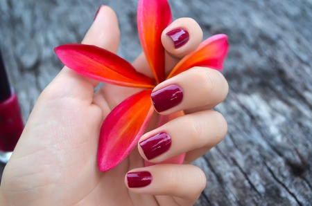 Beautiful pink plumeria flower in female hand with bright manicure