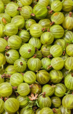 Fresh and sweet gooseberry. Close up photo.