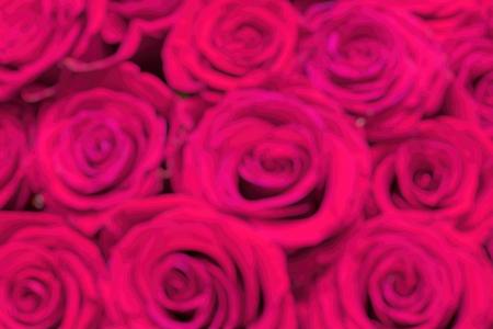 Bouquet of flowers. Fresh pink roses, closeup Reklamní fotografie