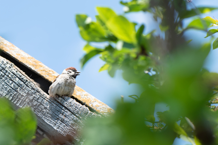 Small sparrow sits on the roof of the house. Imagens