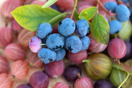 Fresh picked blueberries with gooseberries close up