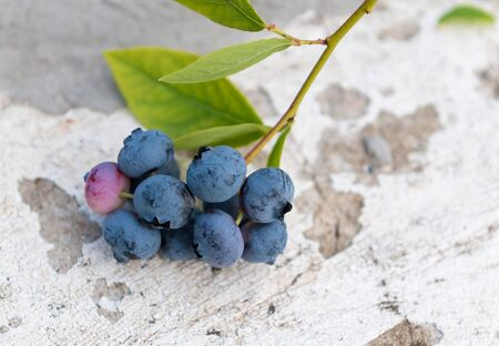 Fresh picked blueberries on concrete background close up