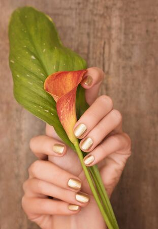 Beautiful female hands with gold nail design holding calla lily