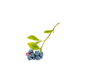 Fresh blueberries with green leaves on white background.