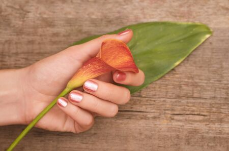 Beautiful female hands with pink nail design holding calla lily