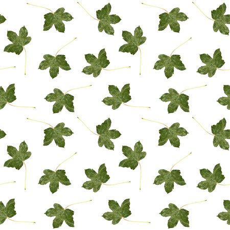 Seamless pattern of green leaf on white background. Фото со стока
