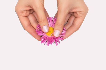Female hands holding pink flower on white background