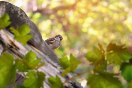 Small sparrow sits on the roof of the house. Reklamní fotografie