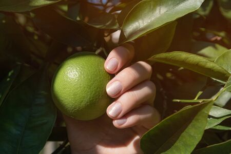 Female hand with glitter nail design holding tangerin