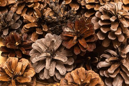 Brown Pine cones as a background, close up