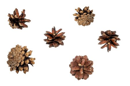 Brown Pine cones isolated on white background. Фото со стока