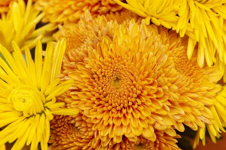 Beautiful orange and yellow flowers background.