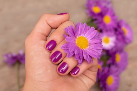 Female hand with purple nail design holding pink flower.