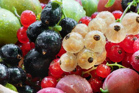 Pile of summer ripe raw berries, blackcurrant, redcurrant, gooseberry, blackberry. Sweet and sour vegeterian diet