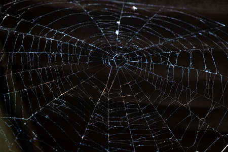 A Close up of A Spider Web.