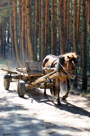 cart road: Logging in the mountains. Cart pulled by a horse on a forest road.