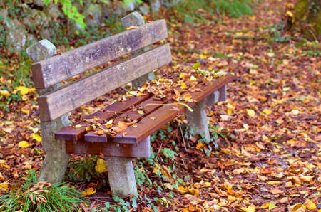 path to romance: Bench in autumn forest.Bench by a forest path covered by leaves during Fall season. Stock Photo