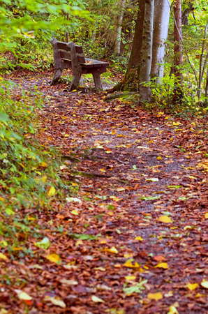 during: Bench in autumn forest.Bench by a forest path covered by leaves during Fall season. Stock Photo