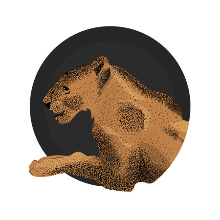 Vector  illustration of muzzle of lioness. Illustration