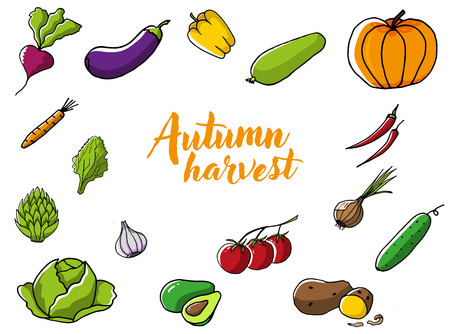Autumn harvest, Set of fresh seasonal vegetables.Eggplant, pepper, radish, zucchini, pumpkin, carrot, lettuce, bow, garlic, tomatoes, cucumber, potato and cabbage in color Ilustracja