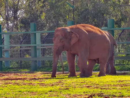 a cute elephan standing in the zoo
