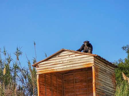 a black monkey sitting high