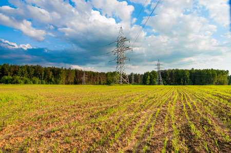 Green field with young corn with Green field, electricity line photo