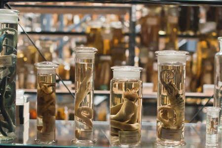 魚類標本、一緒にそれらを保持するエタノール瓶に保管
