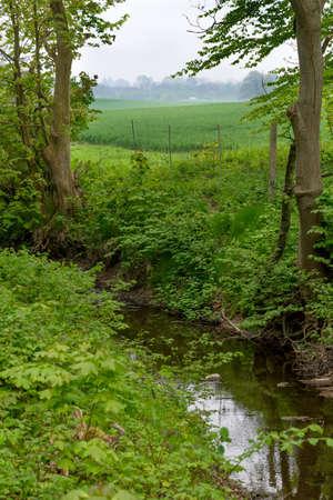 wheather: Wooden bridge in danish countryside taken in cluudy wheather Stock Photo