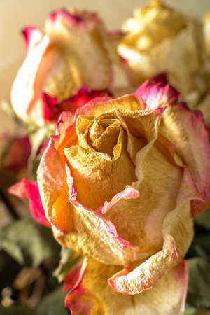 fading: Fading flowers as material pattern in warm tones