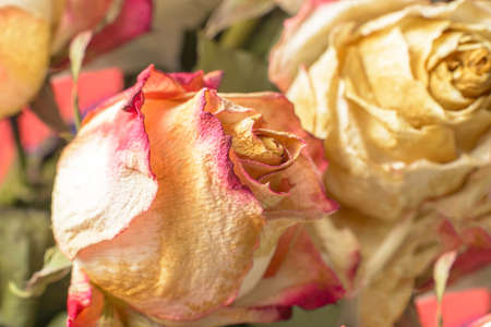 wilting: Fading flowers as material pattern in warm tones