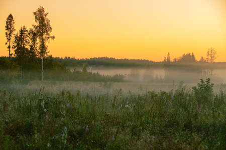 grass: Cloudy landscape in early Morning. Moscow region in Russia