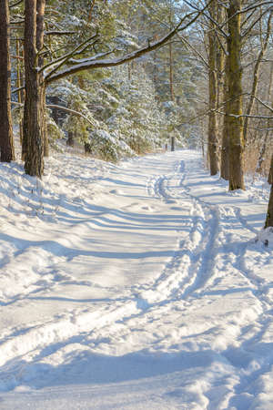 ski traces: winter snow road background with forest for portrait sessions. 85 mm.