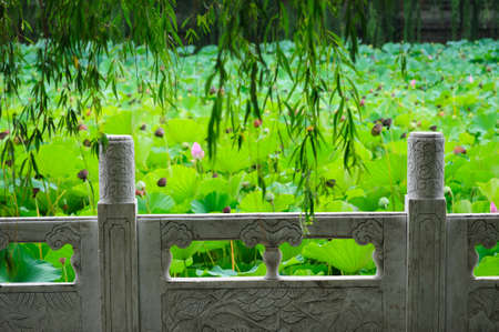 Lotus pond and white marble railings photo