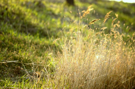 the growth of grass Stock Photo - 15830988