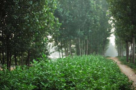 lussureggiante: rigogliosa foresta