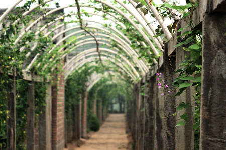 unusual vegetables: This vegetables corridor under farmers industrious practical training, vegetables grow unusual good, and looks like is such beautiful attractive.