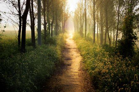 sentier: Dans la lumi�re du matin, m�me les mauvaises herbes les plus courantes sont les plantes comme les merveilles de m�me.