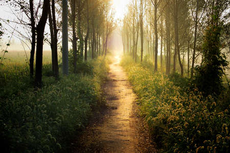trails: In the morning light, even the most common weeds are plants like Wonderland The same.