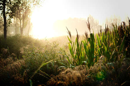 the fruitful: The early morning sun shining on the earth to be fruitful. Crops will be mature. Everything looks are so beautiful. Stock Photo