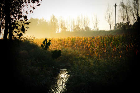 the fruitful: The early morning sun shining on the earth to be fruitful