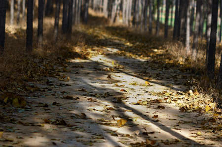 bleak: In late autumn, the darkness and dreariness The sun is shining on the fallen leaves, a bleak sight  Stock Photo