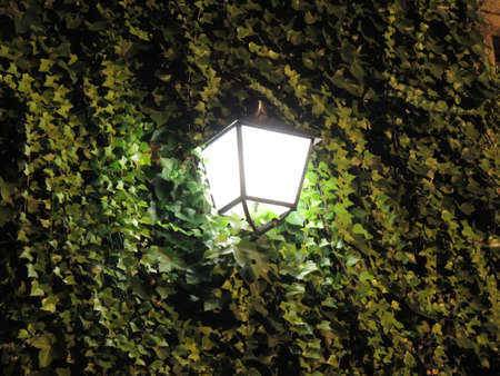 lighted: Lighted lantern at night street