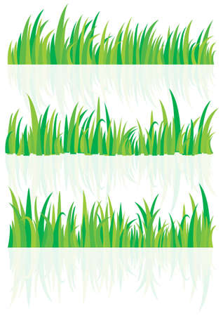 a grass and shadow grass Stock Vector - 18347257