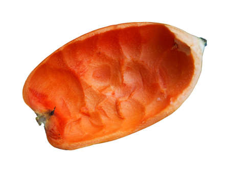 Grated papaya meat left but a shell