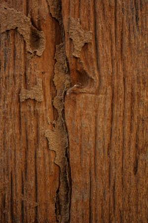 Wood is a beautiful pattern Stock Photo - 18593981