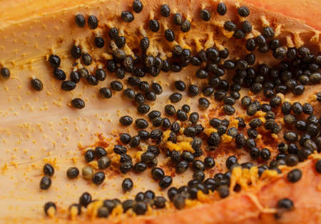 chafe: Flesh of the papaya seed are available