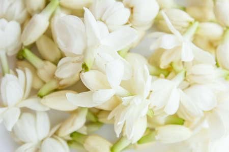 White jasmine was a beautiful