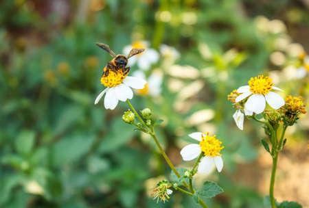 bedeck: Eating bee pollen beautiful Stock Photo